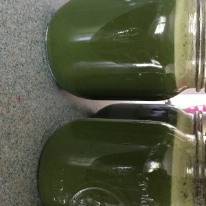 Fresh Pressed Juice – Green