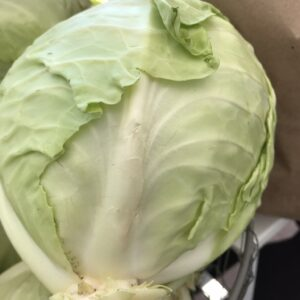 Cabbage – Green