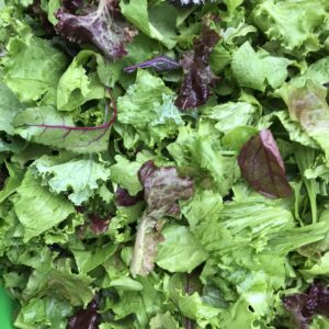Mixed Spring Lettuce